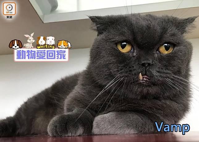 Vamp的犬齒突出,樣子像吸血鬼。(愛協提供)