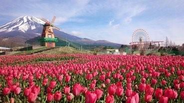 富士山下的21萬朵鬱金香