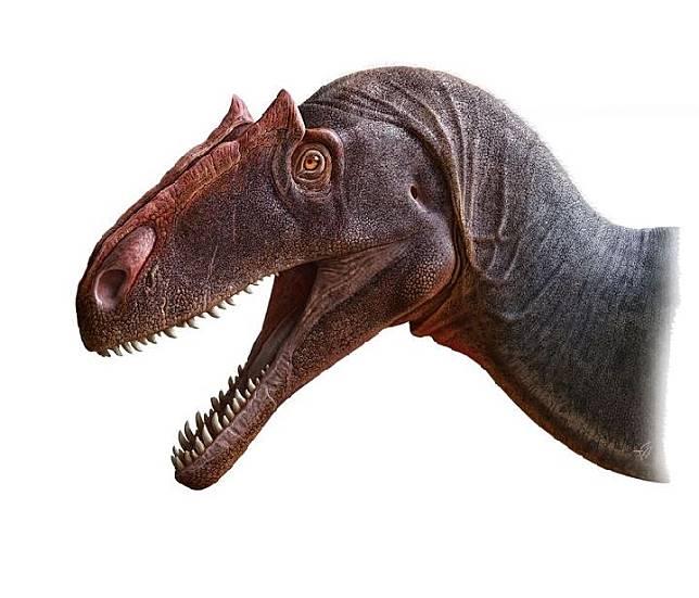 Penggambaran Dinosaurus, Allosaurus Jimmadseni. (Daily Mail/Andey Atuchin/SWNS)