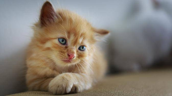 40 Nama Lucu Kucing Betina Mudah Diingat Dan Menggemaskan Bola Com Line Today