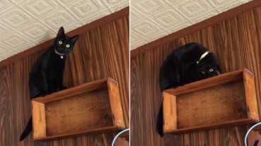 貓星人的異能縮骨功... 又是壞機了嗎?