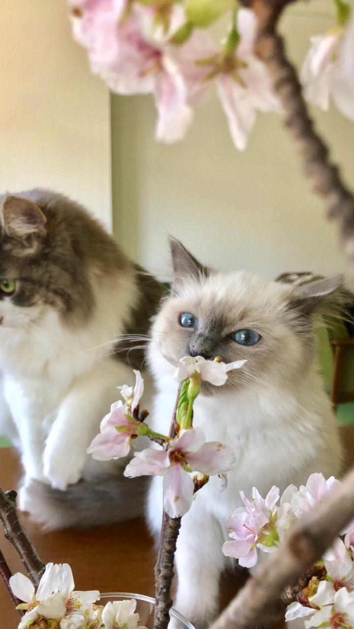 うちの猫自慢【株式会社nyans公式】