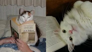 那些全心全意要阻撓你看書的喵星人!