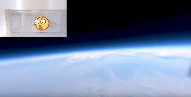 ▲網紅將蟑螂送上太空,測試其生命力。(圖/翻攝好奇五先生 YT )