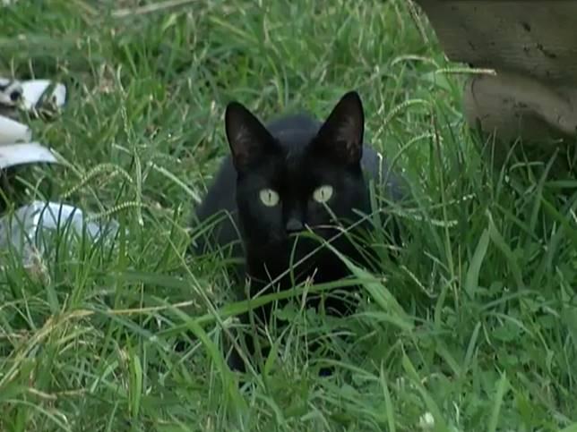 黑貓在清晨大聲叫醒女主人 竟是從大火中拯救8口之家!