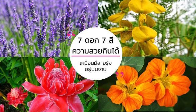 ดอกไม้กินได้ – 7 ดอก 7 สี จากธรรมชาติ เหมือนมีสายรุ้งอยู่บนจาน