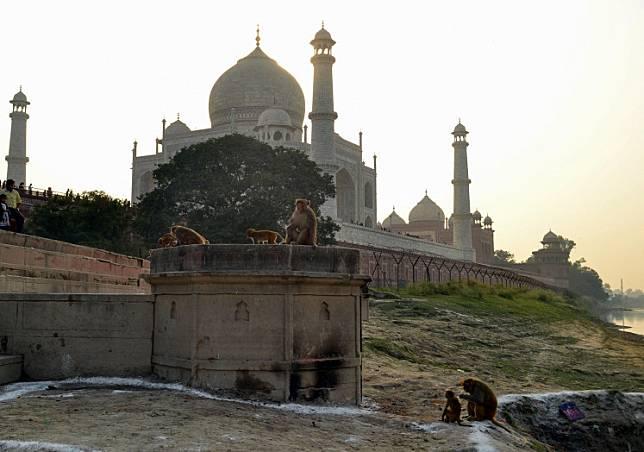 In this file photo taken on November 13, 2018, macaque monkeys gather near the Taj Mahal monument in Agra in India's Uttar Pradesh state.