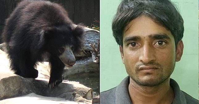 男愛吃「懶熊陰莖」又盜獵老虎 逃亡6年終於逮捕歸案
