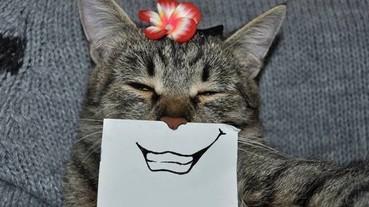 一張白紙換上嘴巴 就能把喵星人變成超有喜感的漫畫貓!