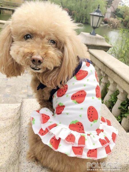 寵物雪納瑞小型犬泰迪比熊博美春夏裝薄款狗狗衣服草莓甜心情侶裝 polygirl