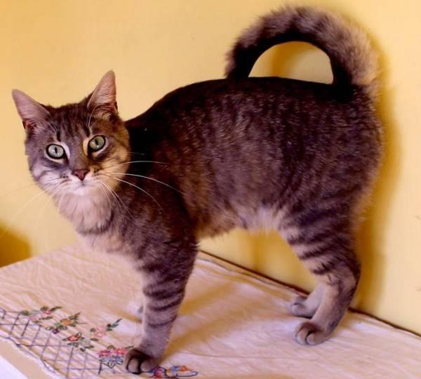 Download 65+  Gambar Kucing Anggora Persilangan Dengan Kucing Lokal Lucu