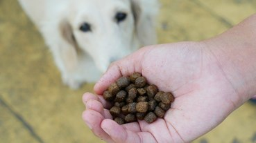 《豆皮妹寵物飼料篇》BESTBREED貝斯比 全齡犬無穀水牛肉+蔬果配方。美國WDJ推薦狗飼料︱影片