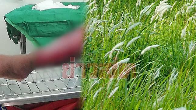 ยาฆ่าหญ้า1