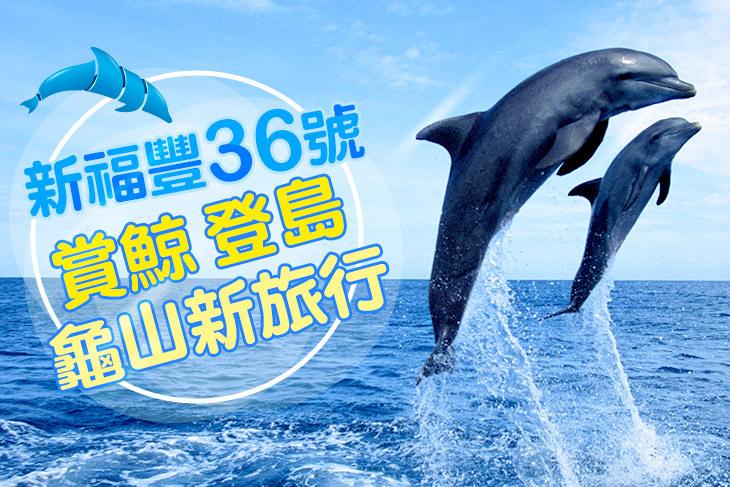 單人賞鯨、登島行程(成人/兒童)