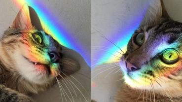 全身散發仙氣的貓星人,不論走到哪裡都有一道彩虹光!