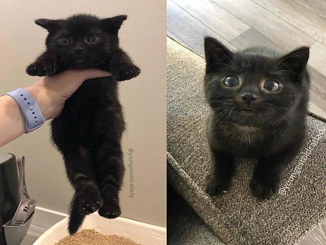 三月齡小貓體型竟然只有一半大 被領養後狂呼嚕又討抱!