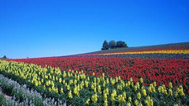 【北海道自由行】夏天的北海道必去景點五選!來北國體驗日本本島沒有的夏日風情