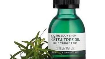 茶樹精油哪裡買?痘痘、濕疹、止癢都可以!人氣茶樹精油推薦TOP8