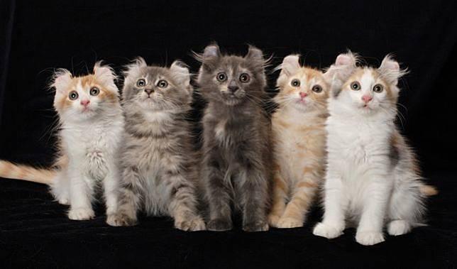 Ini 7 Jenis Kucing Paling Mahal di Dunia Bisa Sampai 1,7 Miliar Rupiah