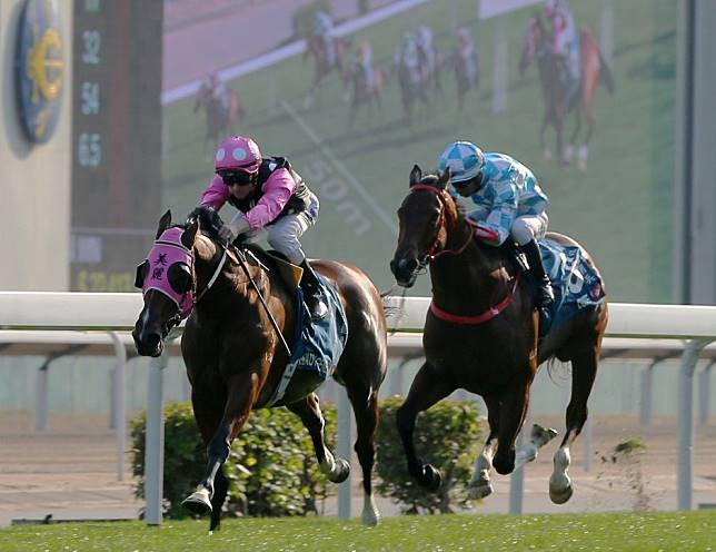Dubai on the table for Beauty Generation 'if he puts in a really big run' in the Stewards' Cup