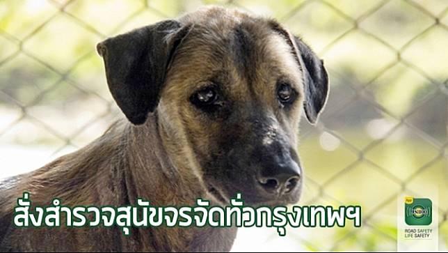 ผู้ว่าฯ กทม. สั่งการ 50 เขต จัดทำแผนแก้ปัญหาสุนัขจรจัด ตัวไหนไม่มีเจ้าของ จับส่งศูนย์พักพิงฯ จ.อุทัยธานี