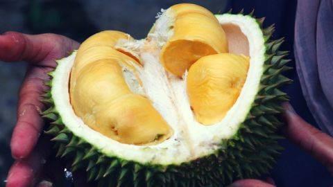 Makanan Paling Bau Didunia Salah Satunya Durian