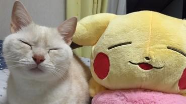幫喵星人買一個同表情的玩偶 一起瞇眼睛的畫面實在太療癒!