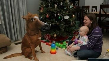 超萌寵物 X 詭譎馬頭 這到底是啥生物啊…