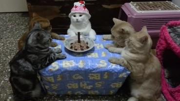 貓咪圍桌淡定慶生 網友驚:好像邪教儀式