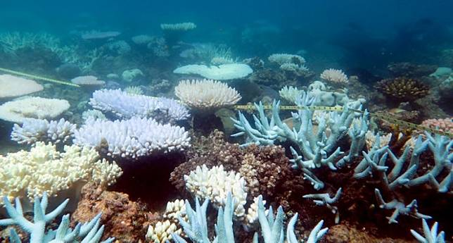 An undated handout photo received from ARC Centre of Excellence for Coral Reef Studies on April 19, 2018 shows a mass bleaching event of coral on Australia's Great Barrier Reef.