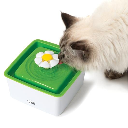 貓咪不喜歡喝水,所以需要誘導他們補充水份,才能有助於減少尿路感染,並確保健康的腎功能。