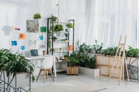 6 Tanaman Hijau yang Bisa Bersihkan Udara di dalam Rumah