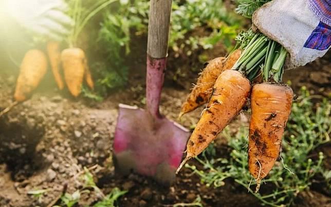 Punya Hobi Berkebun Bisa Jadi Duit? Intip 10 Tips untuk Memulainya