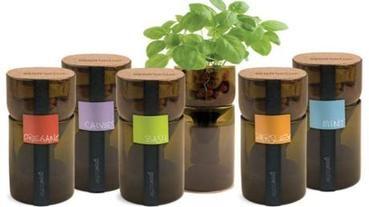 環保小尖兵--水栽瓶中草