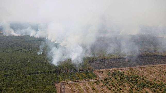 Smog covers trees during a forest fire next to a palm plantation in Palangka Raya, Central Kalimantan province, Indonesia, September 14, 2019. Picture taken Septemnber 14, 2019. Schools in two cities in the Indonesian part of Borneo island will be closed for a week after smoke from forest fires caused air quality to hit