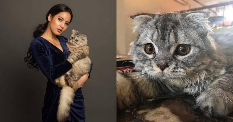 Kucing 5 Seleb Ini Hits Banget Tak Kalah Populer Dari Pemiliknya Brilio Net Line Today