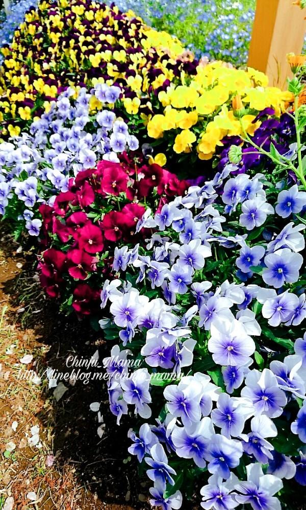 PicsArt_04-27-03.25.09.jpg