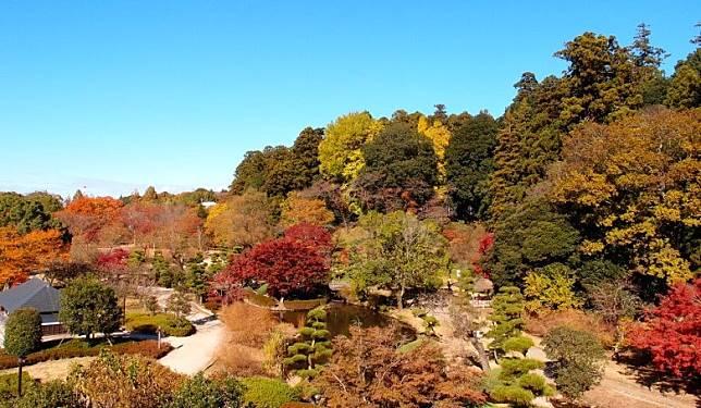 偕楽園為日本三大名園之一,也是當地的賞楓名所。(互聯網)