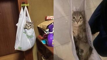 主人回家找不到貓咪 原來牠找到了自己最喜歡的新窩...