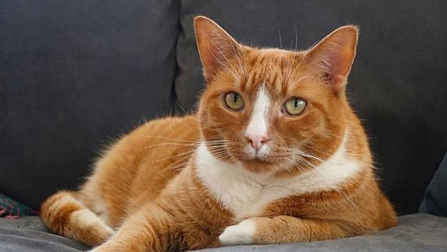 30 Nama Lucu Kucing Jantan Mudah Diingat Dan Menggemaskan Bola Com Line Today