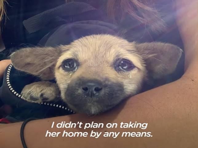 女子為生病小狗放棄度假之旅 還霸氣海遠渡重洋帶回家!