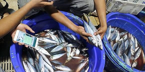 Tips Memilih Ikan Segar Untuk Dibakar Saat Malam Tahun Baru