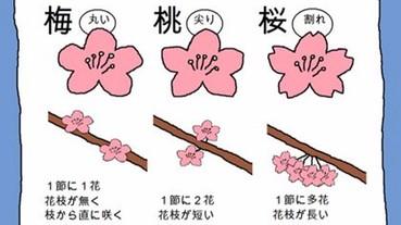 總是說錯花名?日本網友教你簡單分辨梅花、桃花、櫻花的方法!