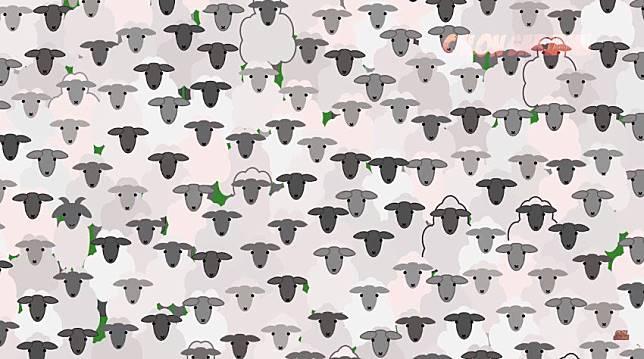 Ingat, domba dan kambing itu berbeda ya! Coba cari gambar kambing