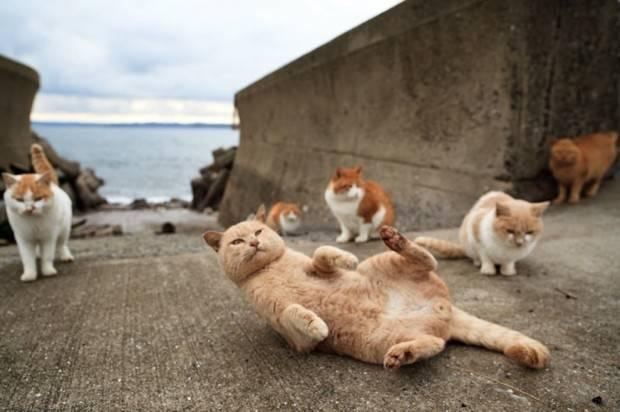 Surga Kucing di Fukuoka Jepang