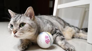 牧貓精品 X PETONEER寵物智能陪伴球、寵物陪伴玩具。貓咪自己就能玩得超開心~