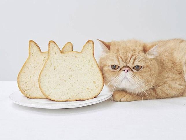 貓頭外形非常可愛,大受貓奴們歡迎。(互聯網)