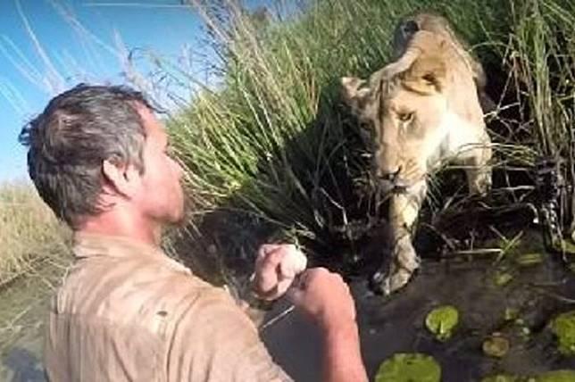 7 Tahun Berpisah, Pertemuan Kembali Singa dan Tuannya ini Bikin Haru