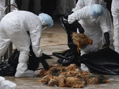 7 Wabah Virus Menggemparkan Dunia, Termasuk Virus Korona