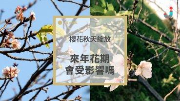 在秋天綻放的櫻花